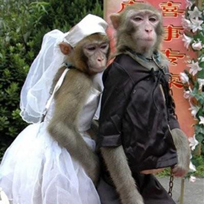 Vikar sklopio više od 360 lažnih brakova