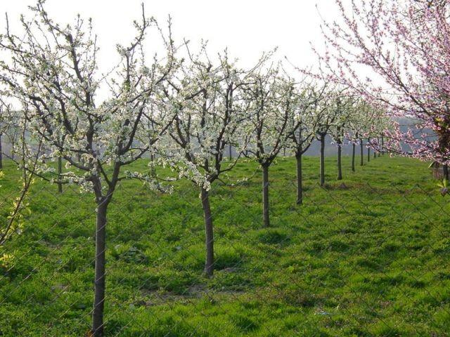 Varaždinska županija sufinancira kupnju sadnica voća te ljekovitog i aromatičnog bilja