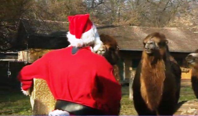 Životinje u zagrebačkom Zoološkom vrtu dobili božićne poklone