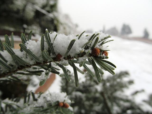 Na Božić popodne u Gorskom kotaru – SNIJEG!